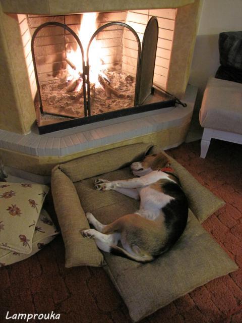 Diy κρεβατάκι σκύλου με παλιά μαξιλάρια
