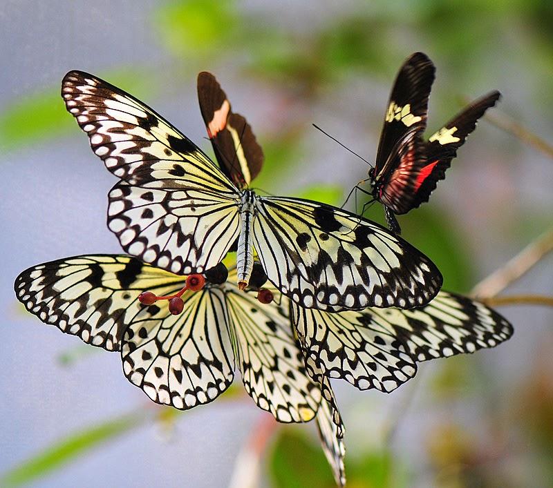 hermosa fotografia de mariposas