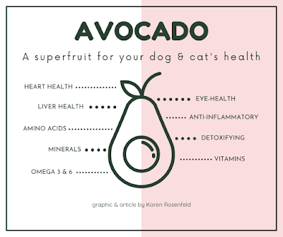 avocado health benefits for dogs, a health promoting superfruit