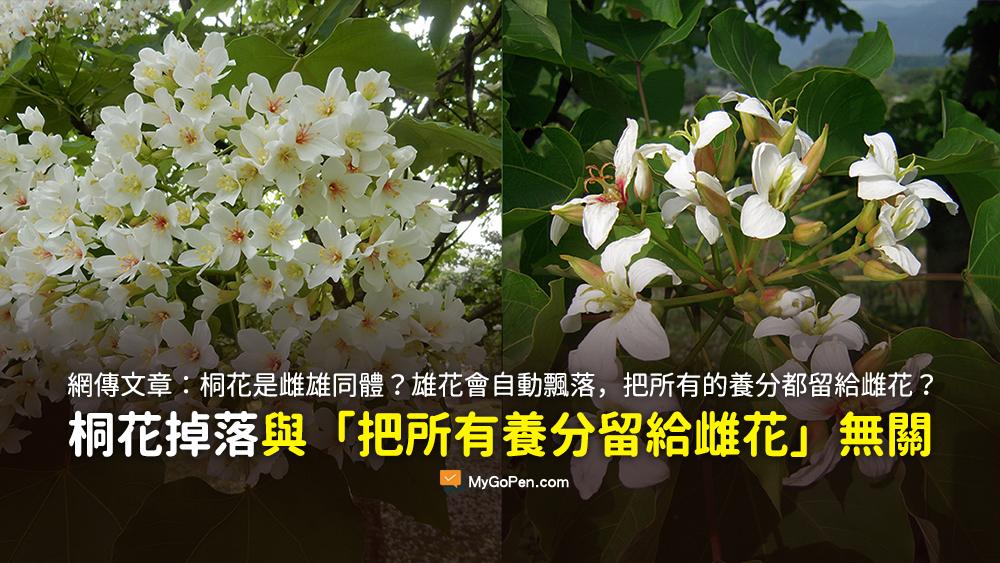 桐花是雌雄同體的 一棵樹上有雌花也有雄花 雄花會自動飄落 把所有的養分都留給雌花 謠言
