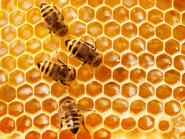 menjaga lingkungan dengan beternak lebah