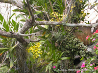 orquídeas vivem