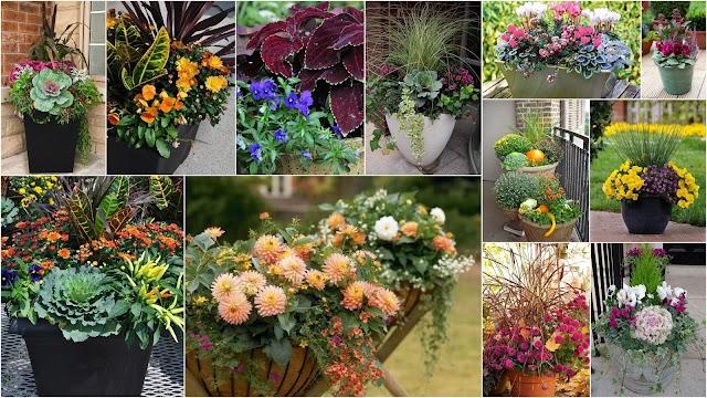 15+ Συνδυασμοί φυτών για Φθινοπωρινές γλάστρες