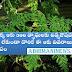 The Single Leaf Wonder Medicin For 300 Diseases