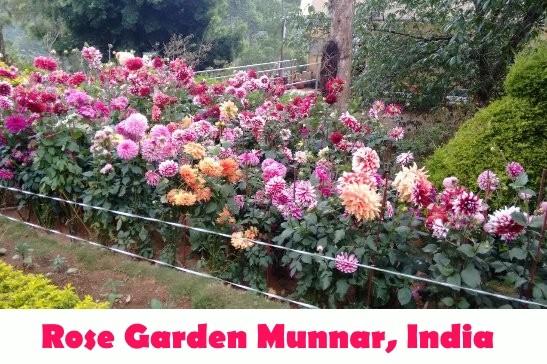 Munnar Attractions : Rose Garden Munnar