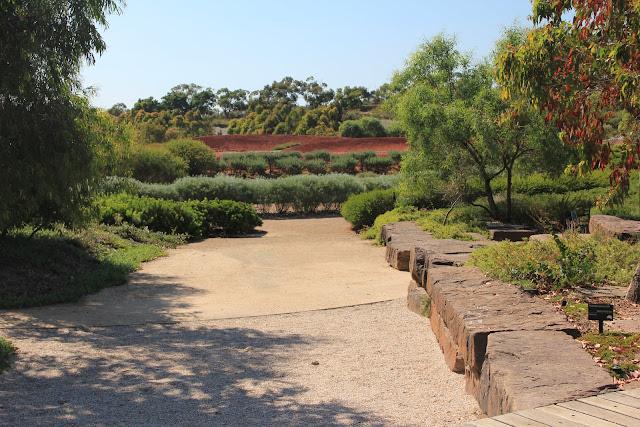 Well known natives include Eucalyptus sp. (Gum Trees), Callistemon sp. (Bottlebrush) and Melaleuca sp. (Paperbark).