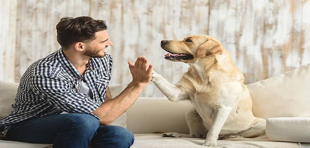 Important things to learn when teaching a dog