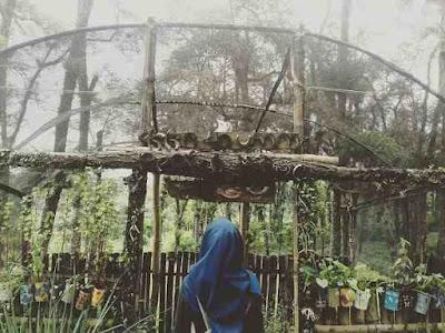 Rumah Pohon di Malang Paling Instagramable