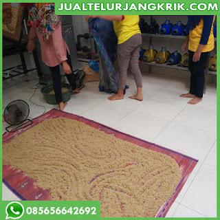 Bibit Jangkrik Bandung