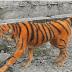 Κακοποίησαν σκύλο βάφοντας τον τίγρη