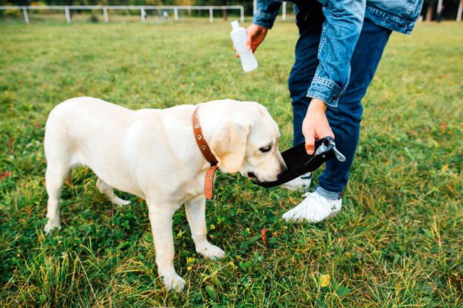 Czy pies może pić mleko?