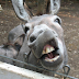 Zimbabwean man bags 8months in jail for raping a Donkey
