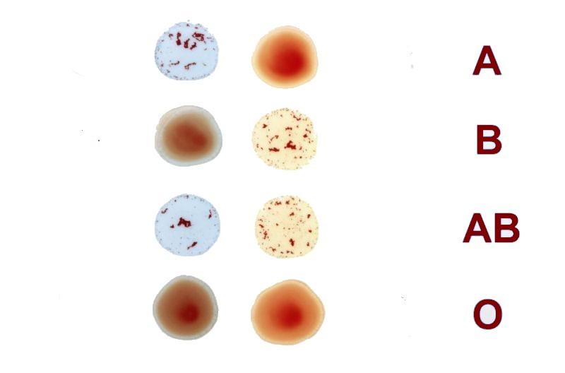 Berikut Cara Mengetahui Kepribadian Seseorang Berdasarkan Golongan Darah