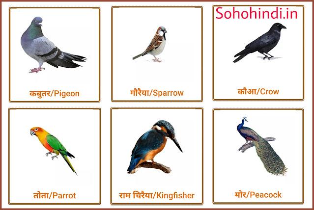 Birds name in hindi english