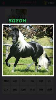 в загоне за забором бегает черная лошадь с белой гривой
