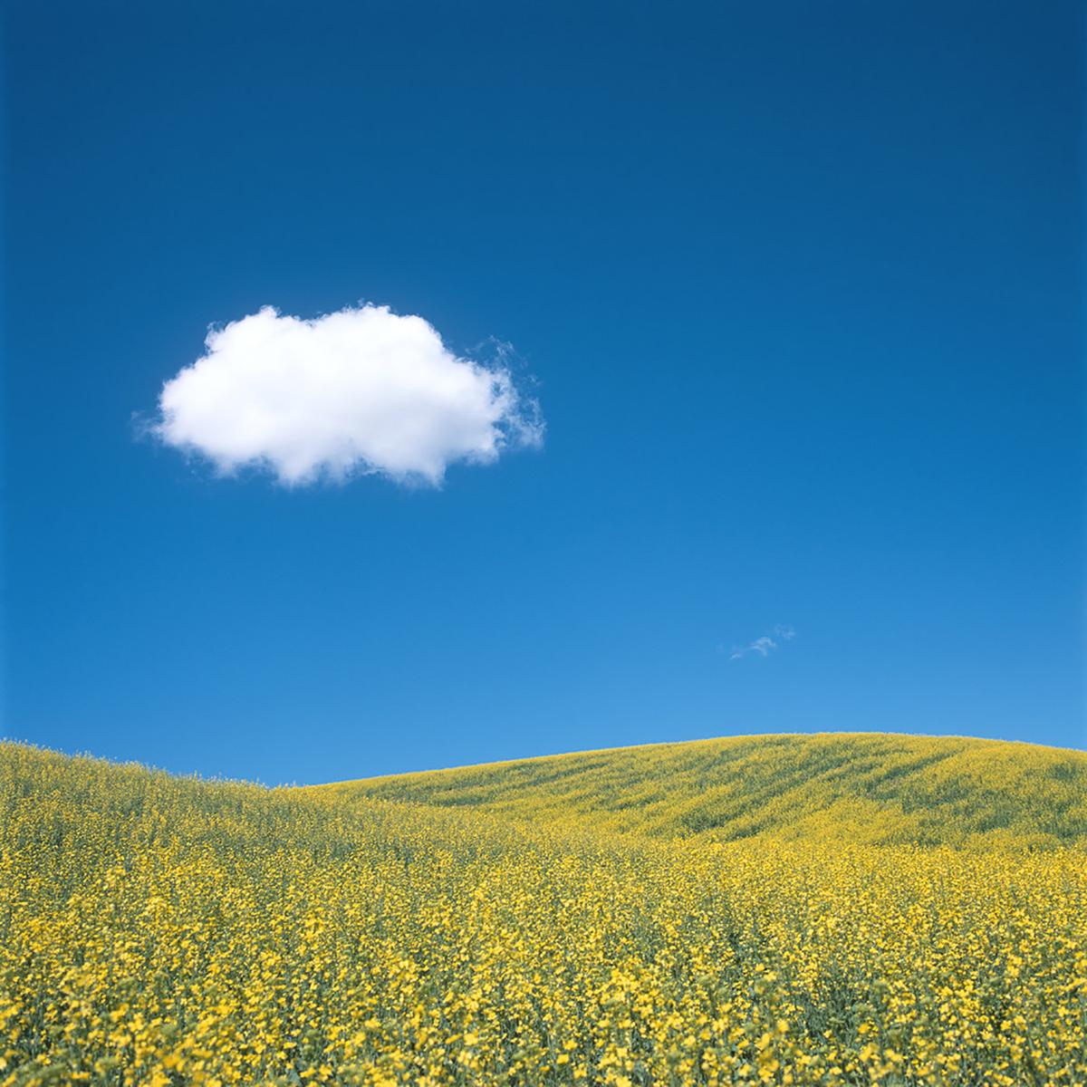 Simple foto bertema langit dan padang bunga