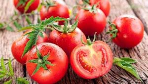Wajib Tahu! Lima Manfaat Tomat Untuk Kesehatan
