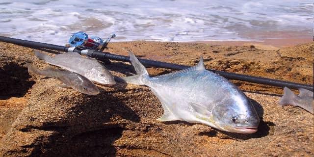 Ikan GT yang Menggoda di Pulau Tunda