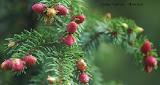 Våre(ns) fineste jordbærtrær...