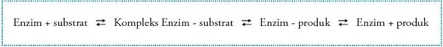persamaan reaksi enzimatis sederhana