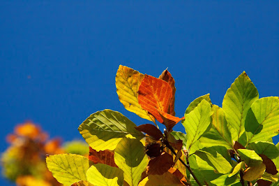 colorful-leaves-wallapapers-pics