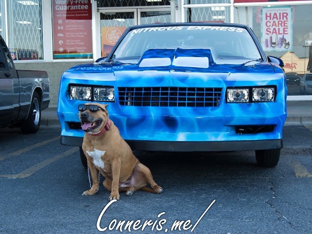 Chevrolet Monte Carlo Drag Car Pitbull with Sunglasses
