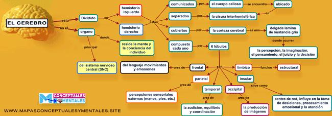 Mapa conceptual del cerebro humano, sus partes y funciones