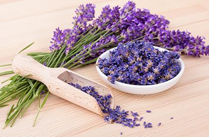 اللافندر (الخزامى) lavender
