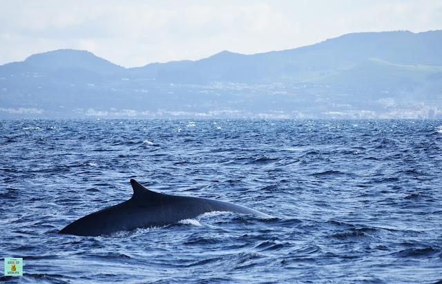Avistamiento de ballenas en Sao Miguel