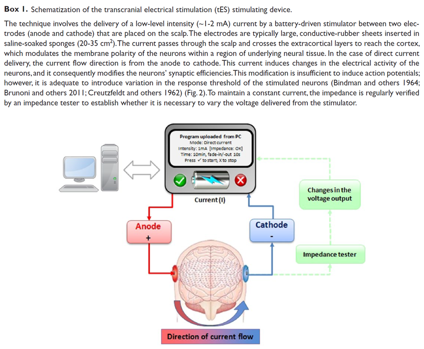the neurocritic don t lose your head over tdcs based on direct modulation of the affected neurons resting membrane potential is described in the schematic below click on image for a larger view