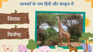 giraffe name in sanskrit and hindi with images