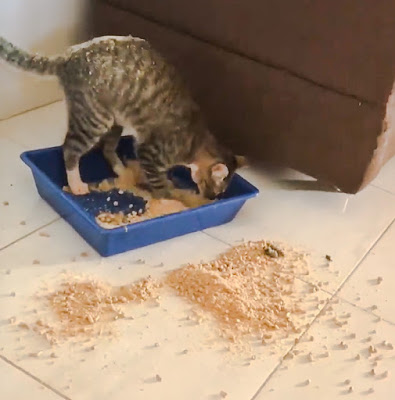 Cat upends litter tray