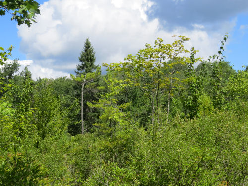 Huckleberry Bog