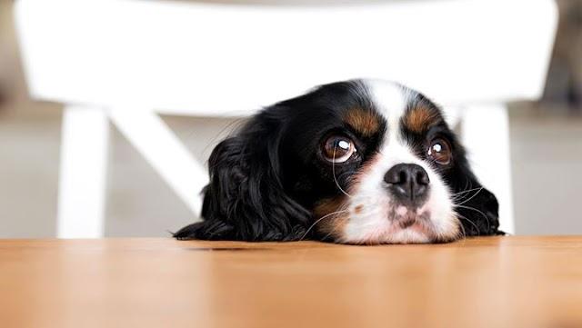 Σημάδια που δείχνουν ότι έχετε παραμελήσει τον σκύλο σας