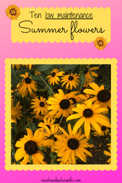 best flowers for your garden; why are these the best summer flowers; favorite summer flowers for northeast