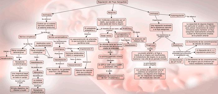 Mapa conceptual de la regulación del flujo sanguíneo