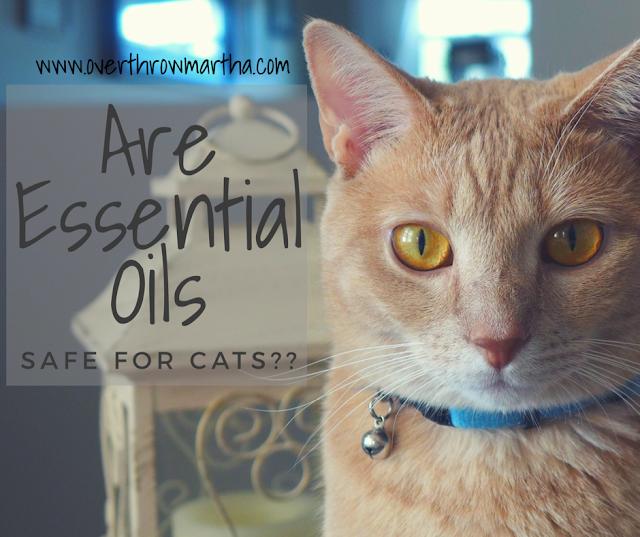 Les huiles essentielles sont-elles sans danger pour les chats?