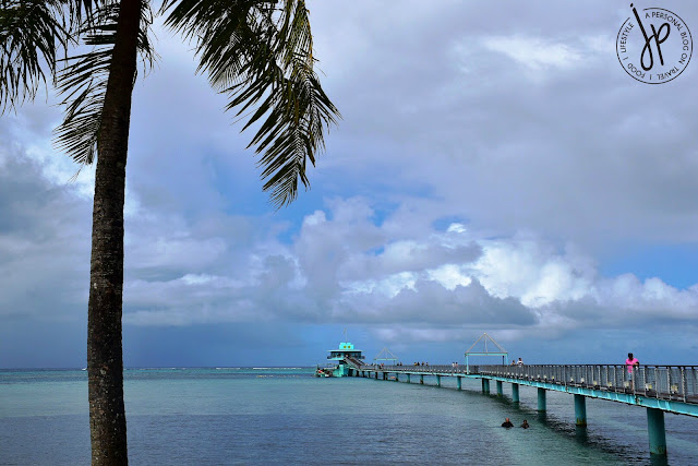 coconut tree, ocean, bridge