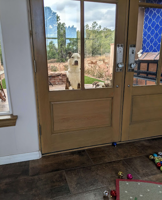 dogs looking through the window