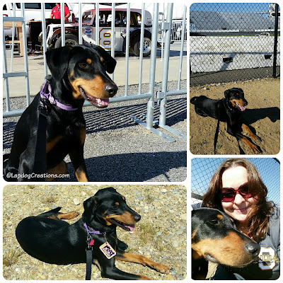 Doberman Mix Dog at race track