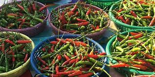 Is Santiago Green Pepper Healthy?