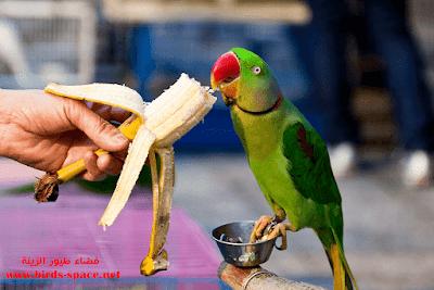 فواكـه صـحية  لطيور الزينة