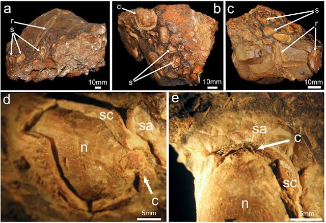 A 180 million year old dinosaur dinner