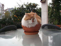An orange and white cat sitting in a little terracotta pot.