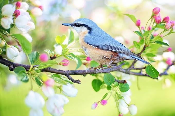 ¿Influye la primavera en el ánimo de todos los signos del zodíaco?