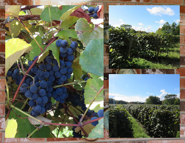 Things to do in Westfield, New York: Lake Erie Vineyards