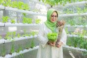 Jilbab Hijau Berbagi Tips Sehat Ekonomis dengan Tanaman Apotik Hidup