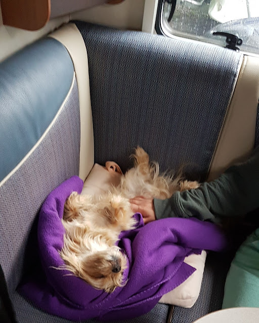 Hund Bronco träumt von der Wanderung um den Alpsee