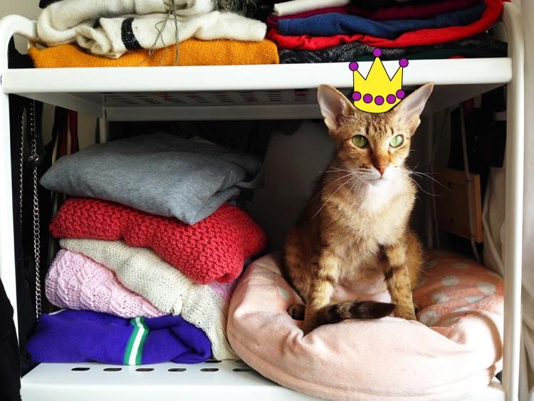 Katze Schlafplatz in der Sonne Katze im Schrank Haustierkissen Katze ist der Chef verwöhntes Haustier Peterbald Majidah