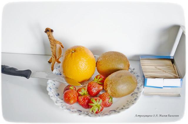 palchikovyj-teatr-igrushki-iz-fetra-surikatplod-kaktusa-frukty